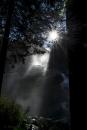 אור ומים ביער