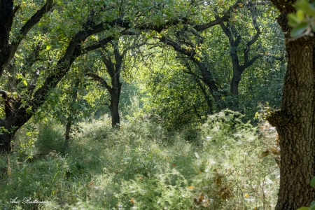 סבך ביער