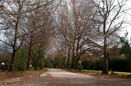 דרך כפרית בגולן
