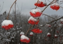 Red & Snow