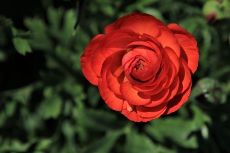אביב אדום 2