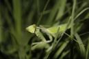 מחבואים בדשא