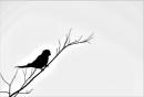 לבד על ענף