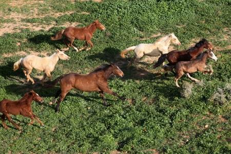 רוצו בני סוסים