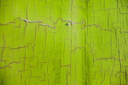 ירוק אילנית