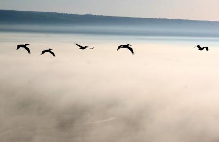 מעל ערפילים בענן