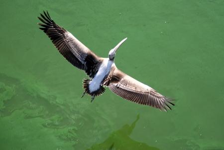 פרישת כנפיים