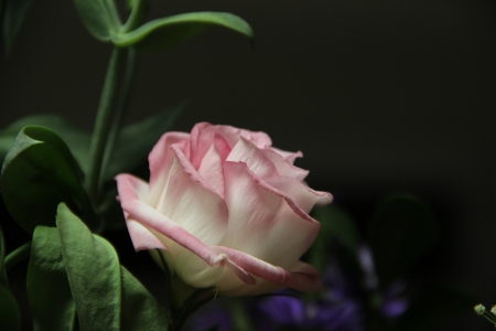 דבר אליי בפרחים