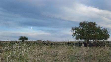 שתי סידריות וירח