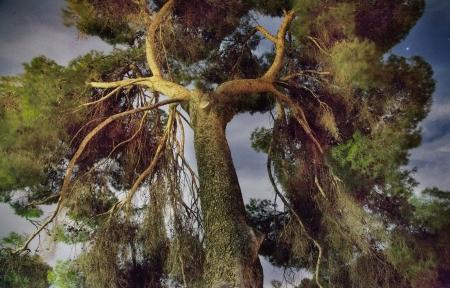 עץ בלילה