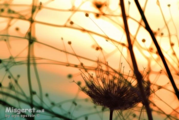 אור  קיץ