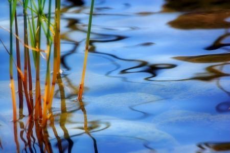פני המים