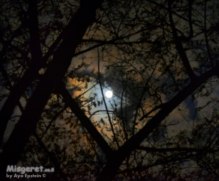 שמי ירח