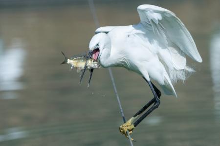 דייגת