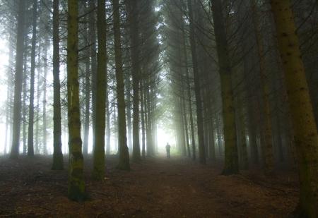 צל ביער