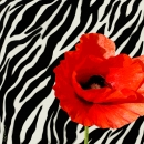 אדום-שחור-לבן