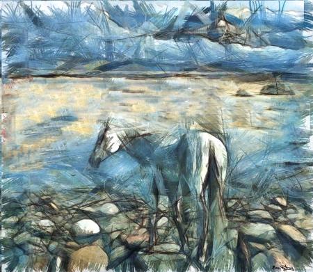 סוס לבן בים המלח,,,הלבן
