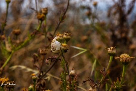 חלזון ופרח