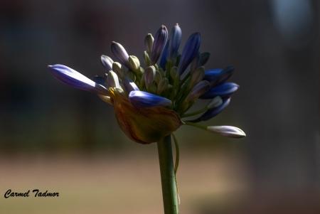 זר של פרח