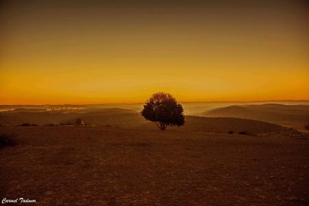 עץ בדימדומים