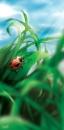 חיפושית פרת משה רבנו