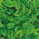 עלי שלכת ירוקים