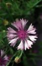 פרח 2
