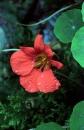 פרח 4