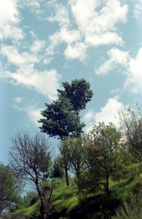 עץ אל מול שמיים