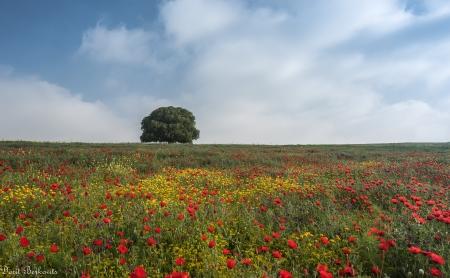 לבד בין הפרחים
