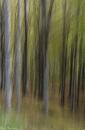 יער מכושף