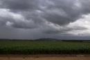 שדה חיטה ביום גשם