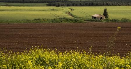 בקתה בשדה אביבי
