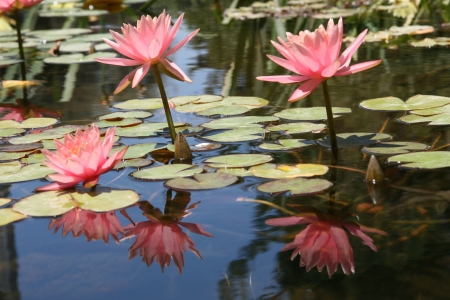 פרח במים