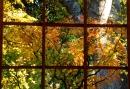 סתו בחלון