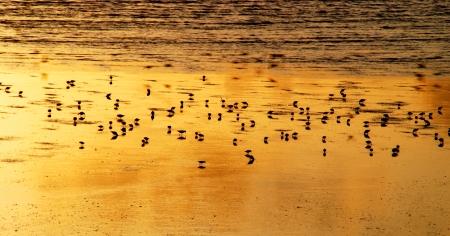שקיעה במפרץ