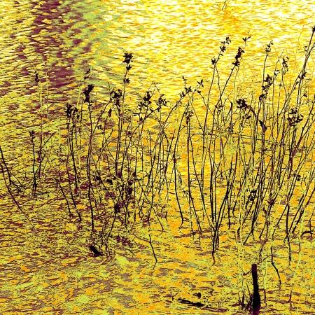 גבעולים במים 2