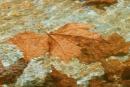 עלה במים