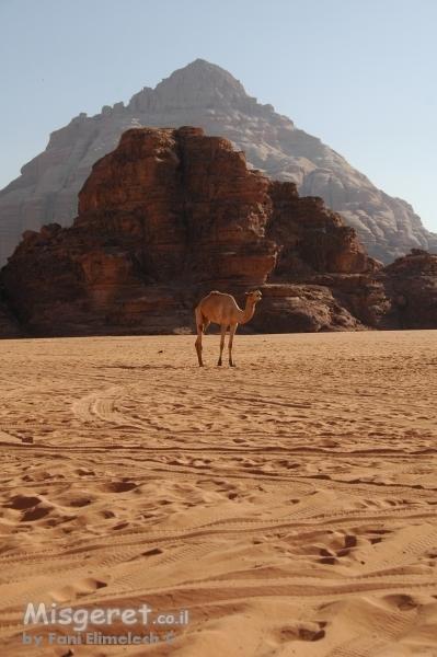 יצירות במדבר