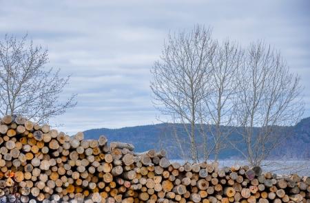 עצים עומדים, עצים שוכבים