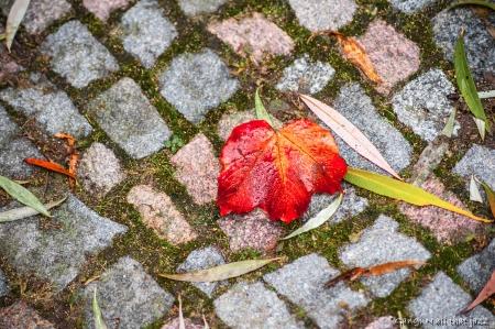 בודד בסתיו