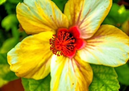 דבר אליי בפרחים צהובים