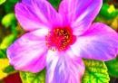 דבר אליי בפרחים ורודים