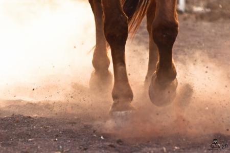 סוס דוהר