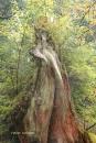 מלכת היער