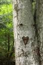גברת עץ