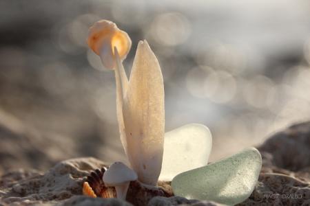 פרח ים