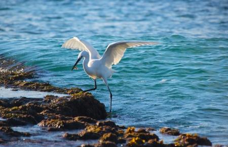 כנפיים של שמחה