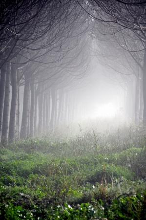היער הקסום
