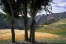 העמק הקסום